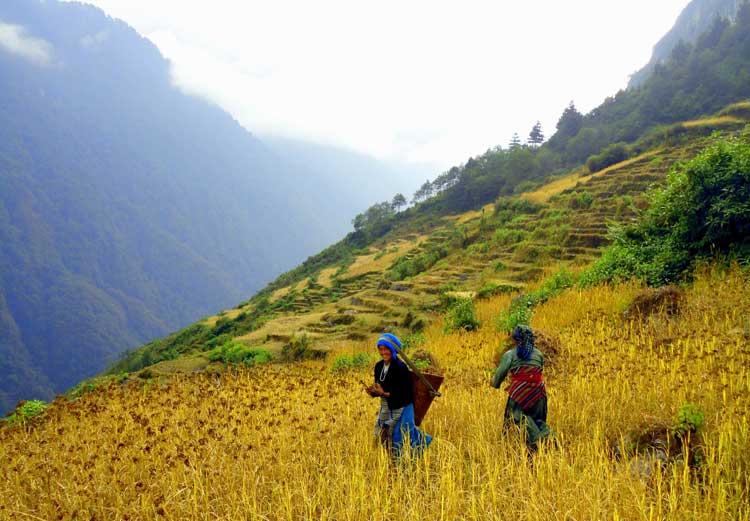Tortong Kanchenjunga