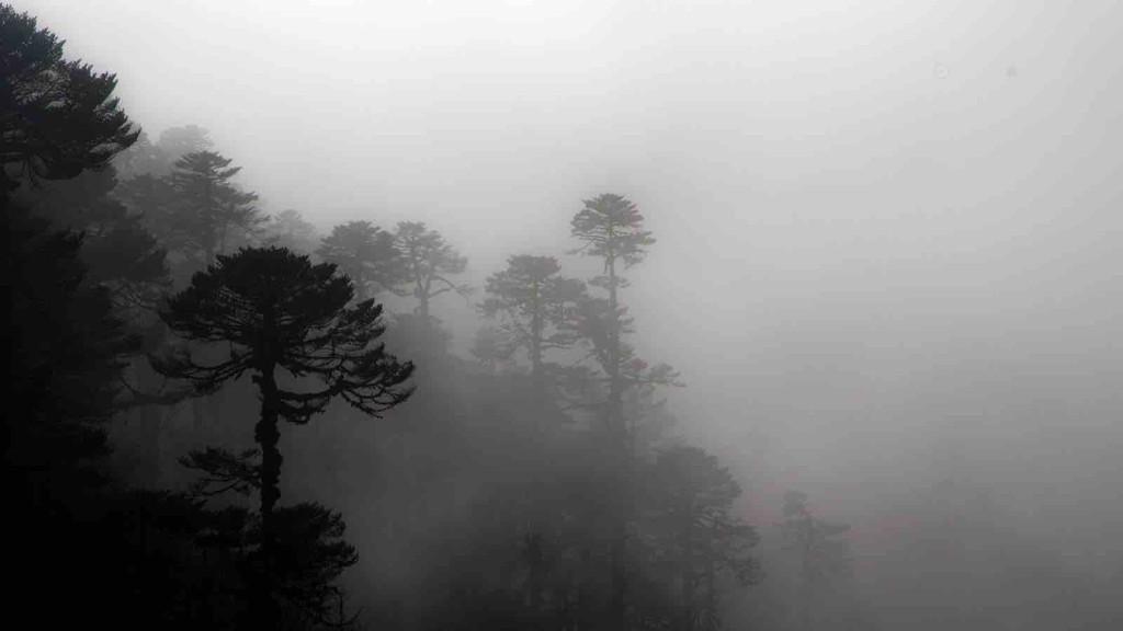 Kanchenjunga Forest
