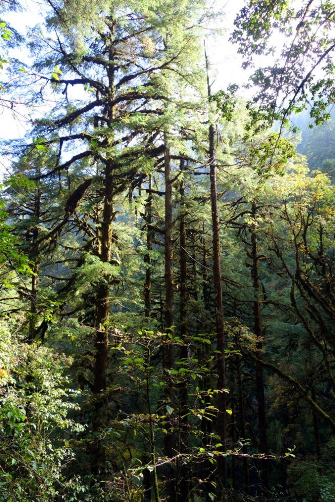 Forest near Tortong